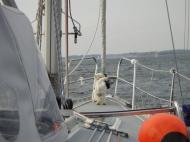 Bild_023-2012
